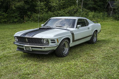 Mustang Royalty Free Stock Images