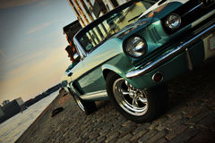 Mustang cruising. Shelby Replica of the Mustang 350 in the setting sun stock image