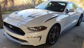 Mustang de Foord foto de stock royalty free