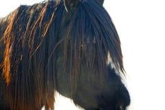 Mustang en soirée Sun Photo stock