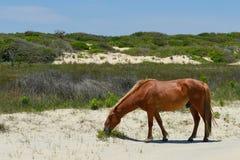 Mustang espagnol Image stock