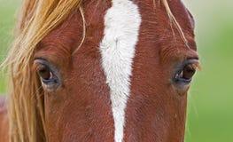 Mustang eyes closeup Royalty Free Stock Photo