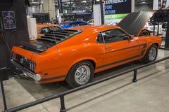 Mustang för framstickande 302 Arkivbilder
