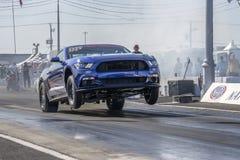 Mustang faisant un wheelie sur la voie à la ligne de départ Photo libre de droits