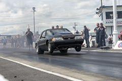 Mustang faisant un wheelie sur la voie Photos libres de droits