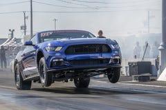 Mustang faisant un wheelie sur la voie Photographie stock libre de droits