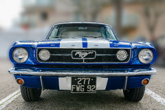 Mustang royalty free stock image