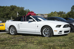 Mustang gift Royalty Free Stock Images