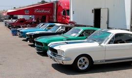 Mustang GT 350 Royalty-vrije Stock Afbeelding