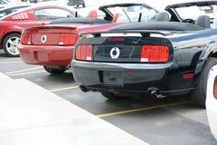 Mustang-hinteres Ende Lizenzfreie Stockfotografie