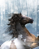 Mustang Horse In The Snow. A magnificent Mustang Horse in the snow. Icicles hanging down and beautiful snowflakes fall from the sky Stock Photos