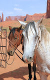 Mustang horses at Monument Valley Stock Images