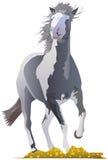 Mustang-Mädchen Stockfoto