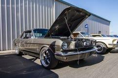 Mustang mais o Car Show 2014 do stockton Ca Fotografia de Stock Royalty Free