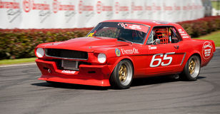 Mustang Muscle Car Racing Royalty Free Stock Photography