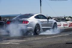 Mustang na śladzie Obraz Stock