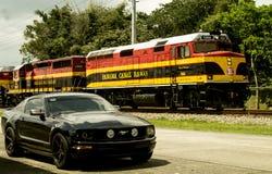 Mustang nel Panama immagine stock