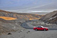 Mustang op de Vallei van de Dood Stock Fotografie