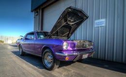 Mustang più il Car Show 2014 dello stockton Ca Immagine Stock Libera da Diritti