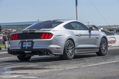 Mustang przy zaczyna linią Obraz Stock