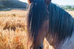 Mustang sauvage au sanctuaire Photo stock