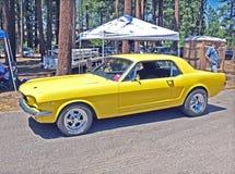 Mustang tôt Photos libres de droits