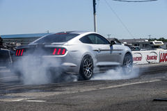 Mustang on the track Stock Image