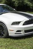 Mustanga szefa 302 początkowy Obrazy Royalty Free