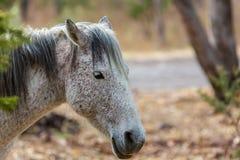 Mustanga wędrować dziki w Meksyk Zdjęcia Royalty Free