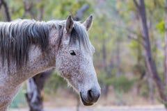 Mustanga wędrować dziki w Meksyk Fotografia Stock