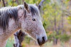 Mustanga wędrować dziki w Meksyk Zdjęcie Stock