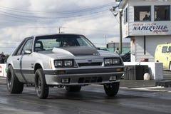 Mustangbegin Stock Afbeelding