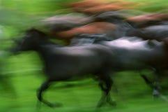 Mustangen royalty-vrije stock foto's