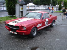 Mustango Fotos de archivo