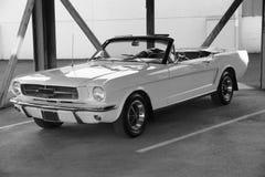 Mustango imagen de archivo