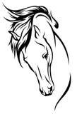 Mustango Imagen de archivo libre de regalías