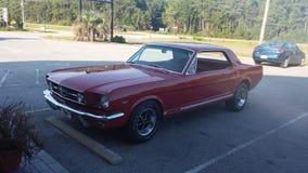 Mustango 67 Imagenes de archivo