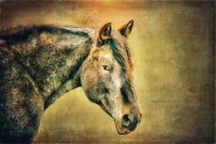 Mustango - Art Composite foto de archivo