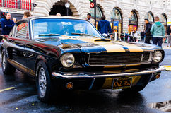Mustangs Royalty Free Stock Photos