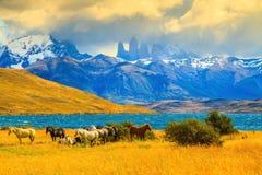 Mustangs auf dem Ufer von Laguna Azul Lizenzfreies Stockfoto