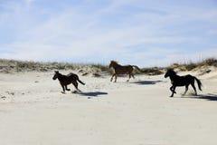 Mustangs die onder Zandduinen lopen stock afbeeldingen
