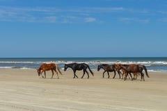 Mustangs espagnols Photographie stock libre de droits