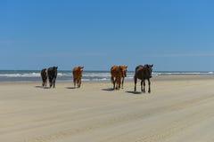Mustangs espagnols Photos libres de droits