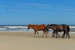 Mustangs espagnols Photos stock