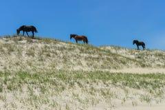 Mustangs espagnols Image libre de droits