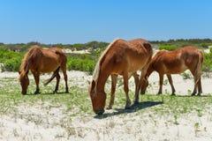 Mustangs espagnols Images stock