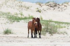 Mustangs espagnols coloniaux sauvages sur le Currituck du nord B externe Images libres de droits