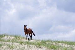 Mustangs espagnols coloniaux sauvages sur le Currituck du nord B externe Image stock