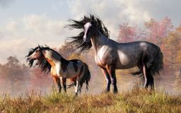 Free Mustangs In The Fall Royalty Free Stock Photography - 139209707