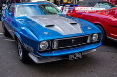 Mustangs Stock Photography
